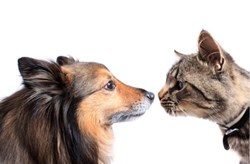 Cats and Dogs: Wendy M. Grossman examines the oftentimes uncomfortable relationship between organizations and their auditors