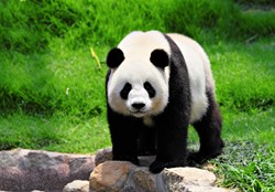 A Chinese consortium known as Deep Panda has been found recently targeting national security think tanks