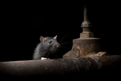 Commercial RAT Used by Malicious Hackers