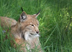 """A highly sophisticated """"hacker for hire"""" group operating out of China has surfaced, dubbed """"Hidden Lynx"""""""