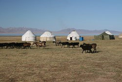 Uyghurs are a nomadic Turkic, Muslim ethnic group living in Eastern and Central Asia and China