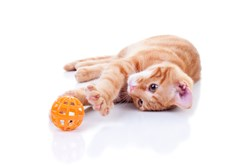 RSA's analysis indicates that the Hand of Thief trojan is more of a kitten rather than malware tiger