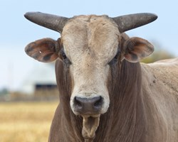 Marc Maiffret prefers a 'no bull' approach to infosec