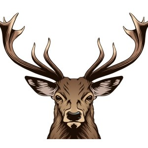 Russian Site Deer.io is 'One-Stop Shop' for Cybercrime ...
