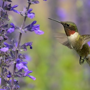 Lookout: HummingBad is Just Shedun Renamed - Infosecurity Magazine
