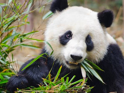 Panda Stealer Targets Crypto Wallets