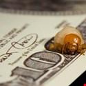 The Top Ten Bug Bounty Rewards
