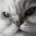 #BHUSA: The 9 Lives of the Charming Kitten Nation-State Attacker