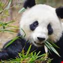 Panda Stealer Targets Crypto Wallets