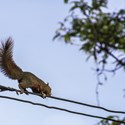 Beware the Squirrels, Not the Hackers